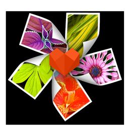Arcsoft Photo+ 3.0.90138 传说中的Mac上的第一看图软件