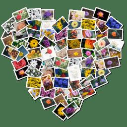 FigrCollage 3.0.5 照片拼图工具